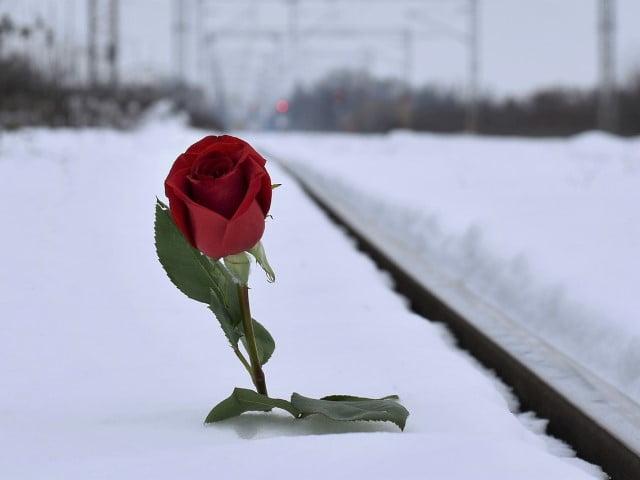 失恋の名言を読めば、必ず、失恋から立ち直れます!